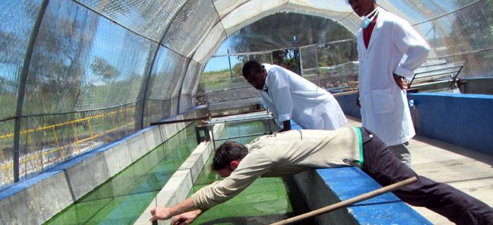 mission spiruliniers Vincent Rioux Madagascar