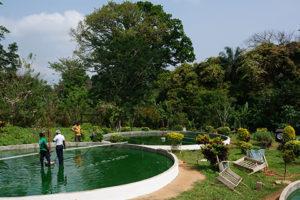 Bassin de spiruline au Togo