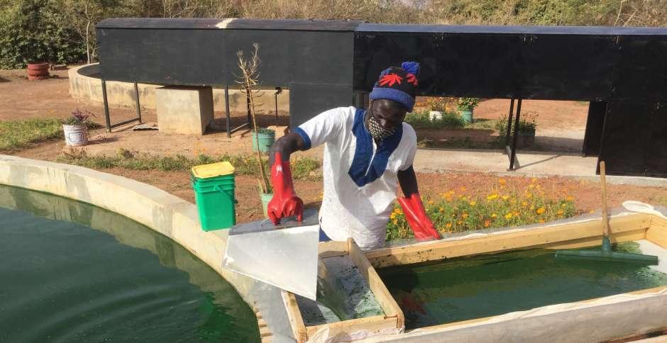 Production locale de spiruline contre la malnutrition