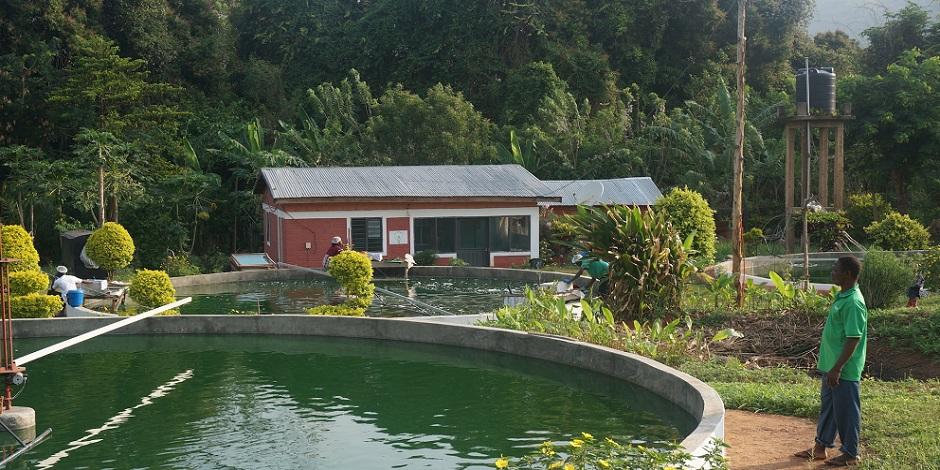 Production locale de spiruline dans des fermes visant à devenir pérennes ...