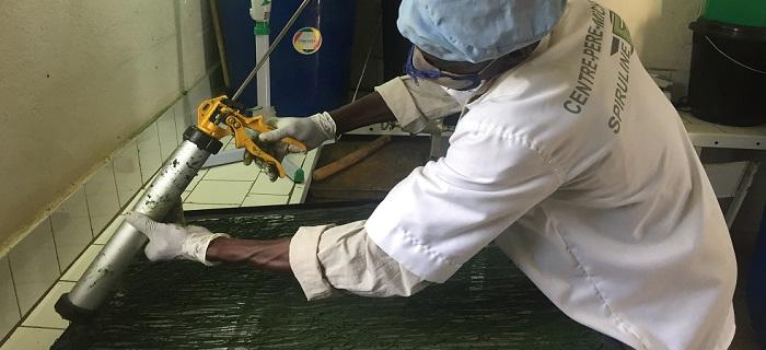 ouvrier qui découpe la spiruline en spaghettis avant le séchage - Mali